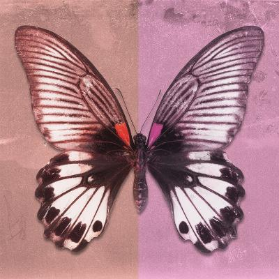 Miss Butterfly Agenor Sq - Red & Pale Violet-Philippe Hugonnard-Photographic Print