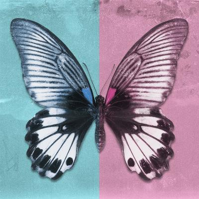Miss Butterfly Agenor Sq - Turquoise & Pale Violet-Philippe Hugonnard-Photographic Print