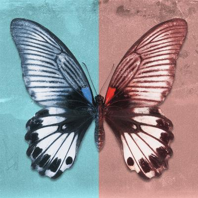 Miss Butterfly Agenor Sq - Turquoise & Red-Philippe Hugonnard-Photographic Print