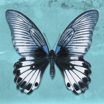 Miss Butterfly Agenor Sq - Turquoise-Philippe Hugonnard-Photographic Print
