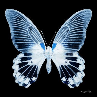 https://imgc.artprintimages.com/img/print/miss-butterfly-agenor-sq-x-ray-black-edition_u-l-q19ndsb0.jpg?p=0