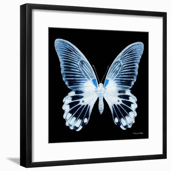 Miss Butterfly Agenor Sq - X-Ray Black Edition-Philippe Hugonnard-Framed Photographic Print