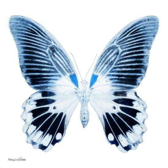 Miss Butterfly Agenor Sq - X-Ray White Edition-Philippe Hugonnard-Photographic Print