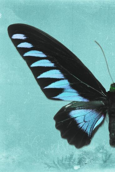 Miss Butterfly Brookiana Profil - Turquoise-Philippe Hugonnard-Photographic Print