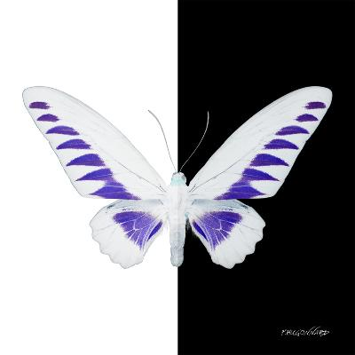 Miss Butterfly Brookiana Sq - X-Ray B&W Edition-Philippe Hugonnard-Photographic Print
