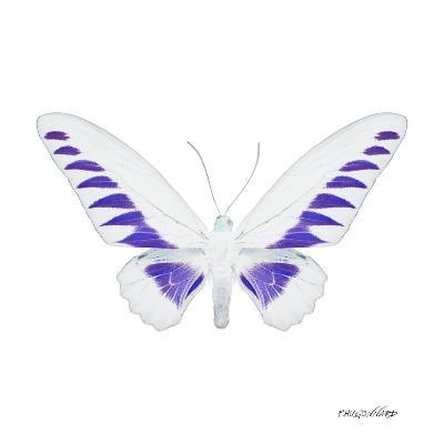 Miss Butterfly Brookiana Sq - X-Ray White Edition-Philippe Hugonnard-Photographic Print