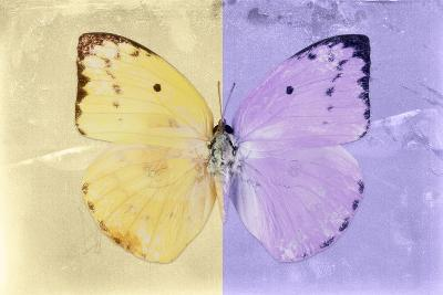 Miss Butterfly Catopsilia - Gold & Mauve-Philippe Hugonnard-Photographic Print
