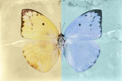 Miss Butterfly Catopsilia - Gold & Turquoise-Philippe Hugonnard-Photographic Print