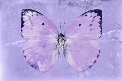 Miss Butterfly Catopsilia - Mauve-Philippe Hugonnard-Photographic Print