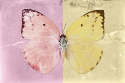 Miss Butterfly Catopsilia - Pale Violet & Gold-Philippe Hugonnard-Photographic Print