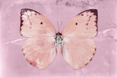 Miss Butterfly Catopsilia - Pale Violet-Philippe Hugonnard-Photographic Print