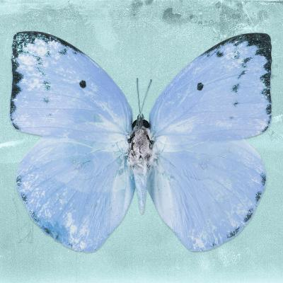 Miss Butterfly Catopsilia Sq - Turquoise-Philippe Hugonnard-Photographic Print