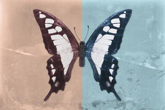 Miss Butterfly Cloanthus - Coral & Turquoise-Philippe Hugonnard-Photographic Print