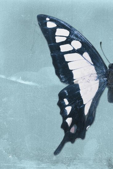 Miss Butterfly Cloanthus Profil - Turquoise-Philippe Hugonnard-Photographic Print