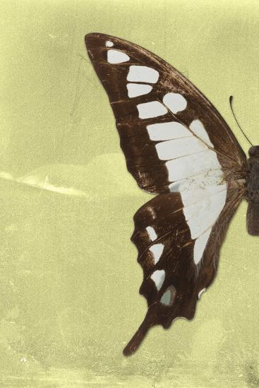 Miss Butterfly Cloanthus Profil - Yellow-Philippe Hugonnard-Photographic Print