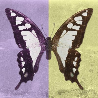 Miss Butterfly Cloanthus Sq - Mauve & Yellow-Philippe Hugonnard-Photographic Print