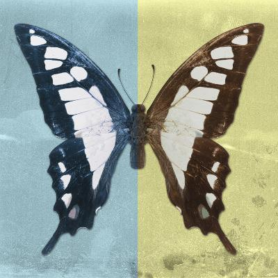 Miss Butterfly Cloanthus Sq - Turquoise & Yellow-Philippe Hugonnard-Photographic Print