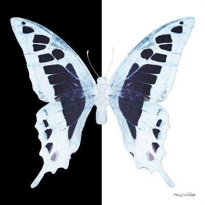 Miss Butterfly Cloanthus Sq - X-Ray B&W Edition-Philippe Hugonnard-Photographic Print