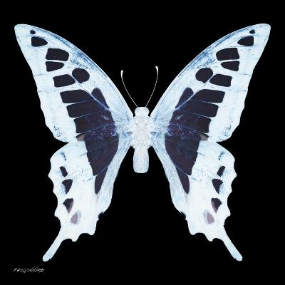 Miss Butterfly Cloanthus Sq - X-Ray Black Edition-Philippe Hugonnard-Photographic Print