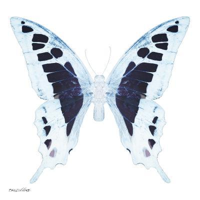 Miss Butterfly Cloanthus Sq - X-Ray White Edition-Philippe Hugonnard-Photographic Print