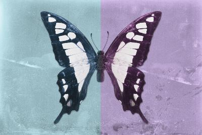 Miss Butterfly Cloanthus - Turquoise & Mauve-Philippe Hugonnard-Photographic Print