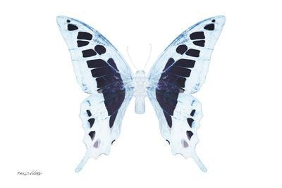 Miss Butterfly Cloanthus - X-Ray White Edition-Philippe Hugonnard-Photographic Print