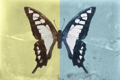 Miss Butterfly Cloanthus - Yellow & Turquoise-Philippe Hugonnard-Photographic Print