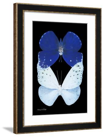 Miss Butterfly Duo Catoploea II - X-Ray Black Edition-Philippe Hugonnard-Framed Photographic Print