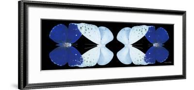 Miss Butterfly Duo Catoploea Pan - X-Ray Black Edition II-Philippe Hugonnard-Framed Photographic Print