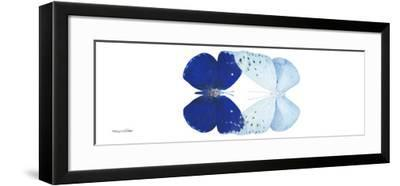 Miss Butterfly Duo Catoploea Pan - X-Ray White Edition-Philippe Hugonnard-Framed Photographic Print