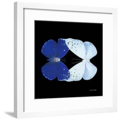 Miss Butterfly Duo Catoploea Sq - X-Ray Black Edition-Philippe Hugonnard-Framed Photographic Print