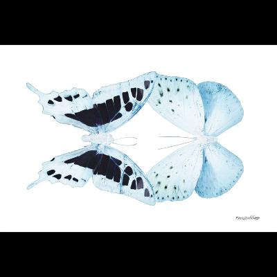 Miss Butterfly Duo Cloanthaea Sq - X-Ray B&W Edition-Philippe Hugonnard-Photographic Print