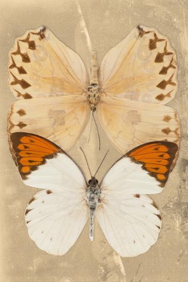 Miss Butterfly Duo Formoia II - Dark Yellow-Philippe Hugonnard-Photographic Print