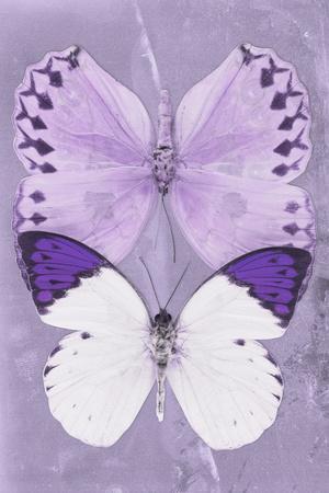 https://imgc.artprintimages.com/img/print/miss-butterfly-duo-formoia-ii-mauve_u-l-q19n8130.jpg?p=0