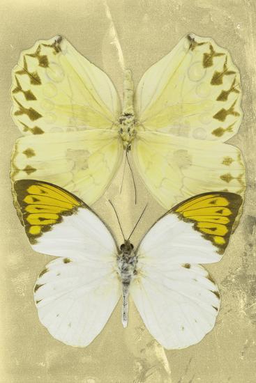 Miss Butterfly Duo Formoia II - Yellow-Philippe Hugonnard-Photographic Print