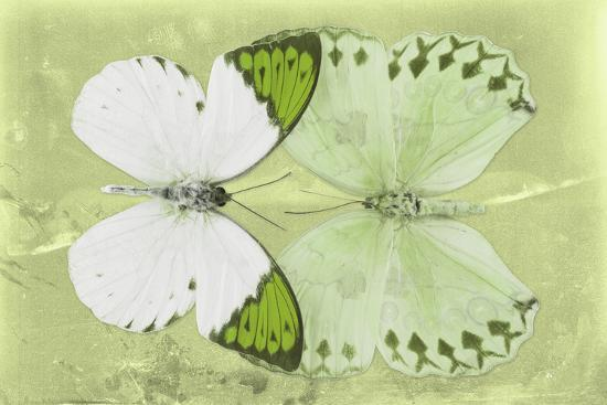 Miss Butterfly Duo Formoia - Lime Green-Philippe Hugonnard-Photographic Print
