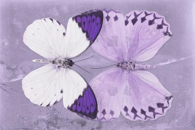 Miss Butterfly Duo Formoia - Mauve-Philippe Hugonnard-Photographic Print