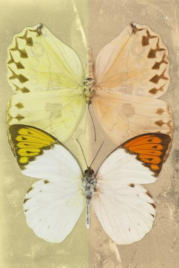Miss Butterfly Duo Formoia - Yellow & Dark Yellow-Philippe Hugonnard-Photographic Print