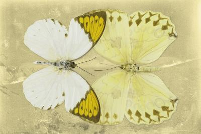 Miss Butterfly Duo Formoia - Yellow-Philippe Hugonnard-Photographic Print