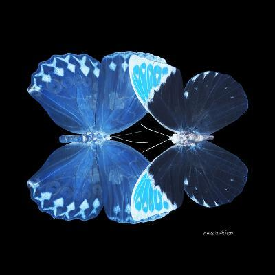 Miss Butterfly Duo Heboformo Sq - X-Ray Black Edition-Philippe Hugonnard-Photographic Print