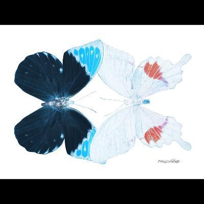 Miss Butterfly Duo Hermosana Sq - X-Ray B&W Edition-Philippe Hugonnard-Photographic Print