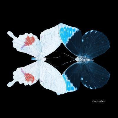 Miss Butterfly Duo Hermosana Sq - X-Ray Black Edition-Philippe Hugonnard-Photographic Print