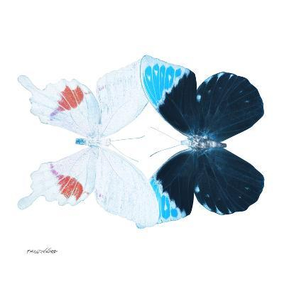 Miss Butterfly Duo Hermosana Sq - X-Ray White Edition-Philippe Hugonnard-Photographic Print