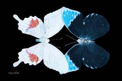 Miss Butterfly Duo Hermosana - X-Ray Black Edition-Philippe Hugonnard-Photographic Print