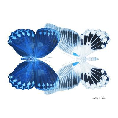 Miss Butterfly Duo Memhowqua Sq - X-Ray White Edition-Philippe Hugonnard-Photographic Print