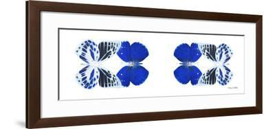 Miss Butterfly Duo Priopomia Pan - X-Ray White Edition II-Philippe Hugonnard-Framed Photographic Print