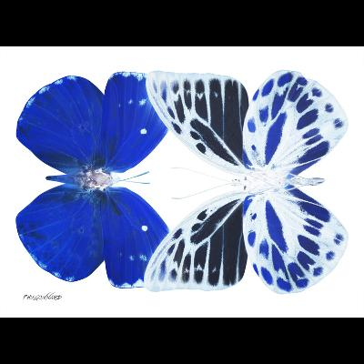Miss Butterfly Duo Priopomia Sq - X-Ray B&W Edition-Philippe Hugonnard-Photographic Print