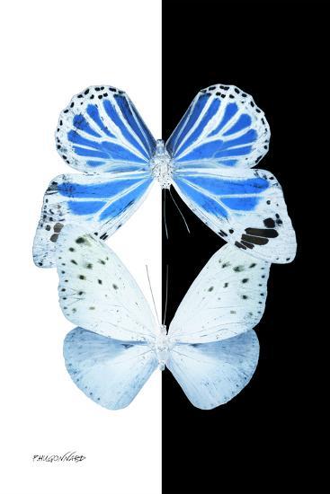 Miss Butterfly Duo Salateuploea II - X-Ray B&W Edition-Philippe Hugonnard-Photographic Print