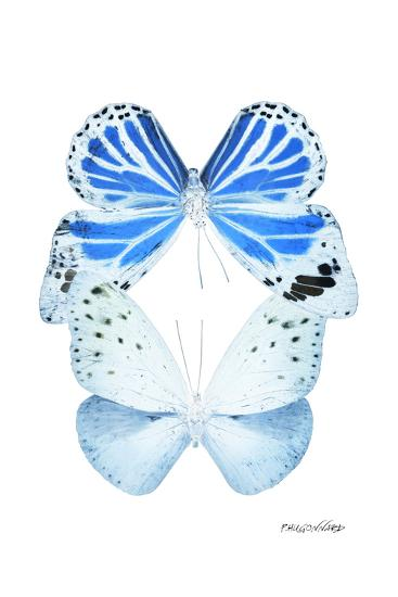 Miss Butterfly Duo Salateuploea II - X-Ray White Edition-Philippe Hugonnard-Photographic Print