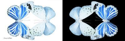 Miss Butterfly Duo Salateuploea Pan - X-Ray B&W Edition-Philippe Hugonnard-Photographic Print